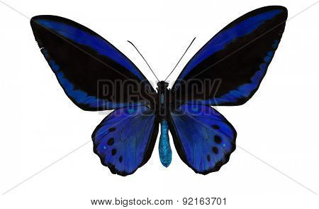 macro photo of blue and black butterfly isolated on white background