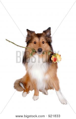 Romantic Dog 4