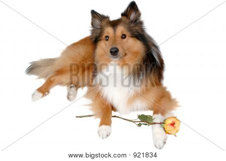 Romantic Dog 6