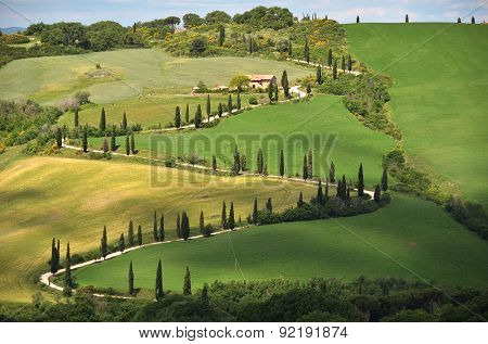 Cypress trees along winding rural road. Tuscany, Italy