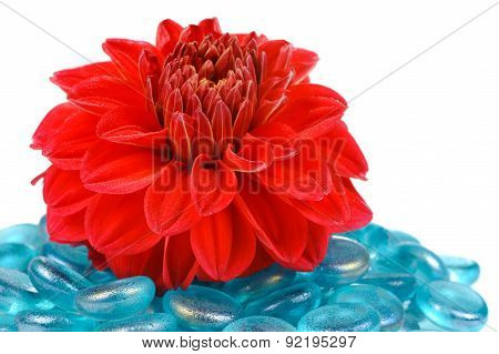 Red Dahlia With Blue Glass Stones On White Background