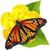 stock photo of monarch butterfly  - Illustration of Monarch butterflies on the yellow flower - JPG