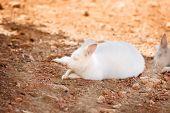 pic of albinos  - Unique Albino White Kangaroo Resting in the Shade  - JPG