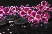 stock photo of geranium  - beautiful spa concept of blooming dark purple geranium flower and beads on ripple reflection dark water closeup - JPG