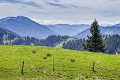 image of bavaria  - Landscape on the mountain Breitenstein in the Alps in Bavaria Germany - JPG