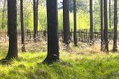 pic of marsh grass  - The primeval forest with grass on ground - JPG