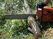 picture of chainsaw  - sawing wood with a chainsaw - JPG
