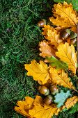 stock photo of acorn  - Acorns with autumn leaves on moss background - JPG