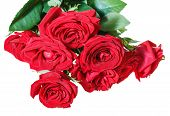 picture of bunch roses  - bunch of red roses isolated on white background - JPG