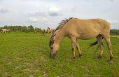 foto of herd horses  - Herd of wild horses grazing in nature in spring - JPG
