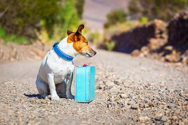 image of sabbatical  - jack russell dog abandoned and left all alone on the road or street with luggage bag or suitcase begging to come home to owners - JPG