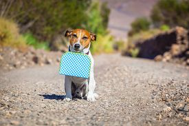 stock photo of sabbatical  - jack russell dog abandoned and left all alone on the road or street with luggage bag or suitcase begging to come home to owners - JPG