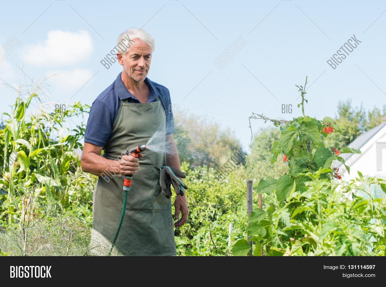 Senior man watering tomato plants in his vegetable garden for Gardening jobs manchester