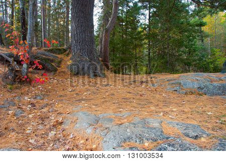 Marinette County the path in the autumn forest Wiskonsin USA