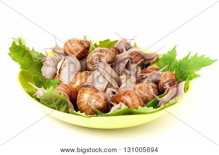 live snails on a plate with grape leaves white background.