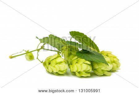 strynatural, nature hop isolated on white background