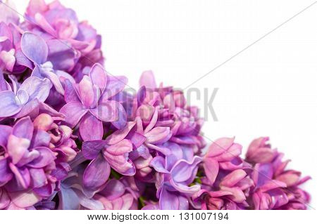 Spring frame with flowers of lilac. Lilac flowers close up.