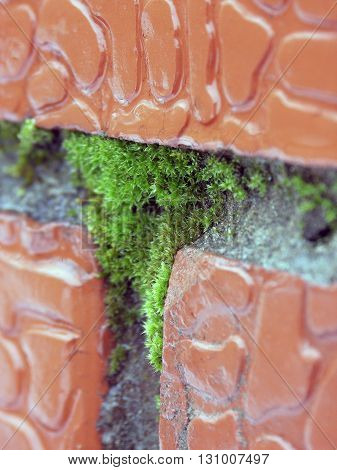 moss green seam in the brickwork of red bricks closeup