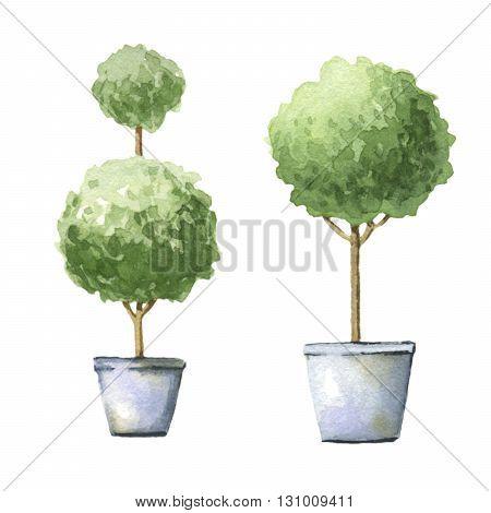 Decorative trees in pots. 2 watercolor illustrations.