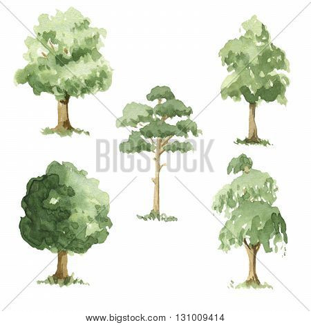 Different types of trees.  5 watercolor illustrations.