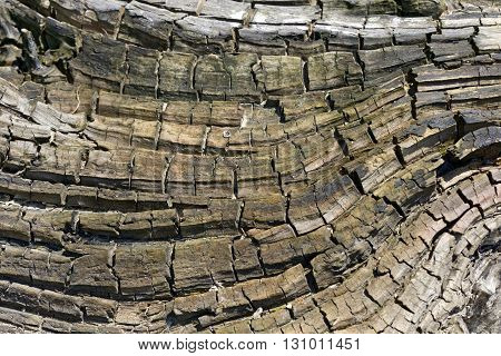 Wood texture abstract macro background, close up