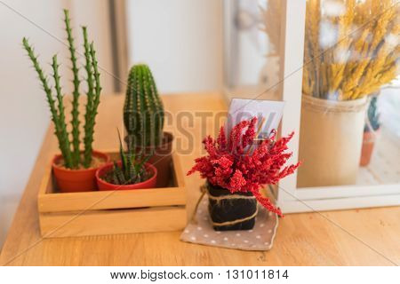Small Cactus Plant Decorated On Table