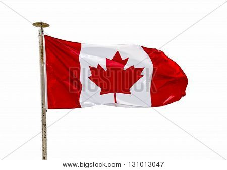 Canadian Flag in the wind over white background (cutout)