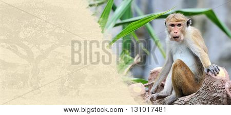 Monkey On Textured Paper