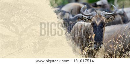 Wildebeest On Textured Paper