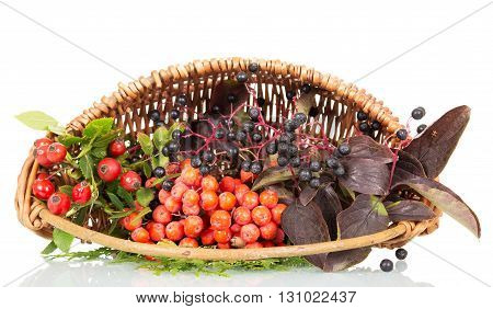 Basket with berries, rose hips, elderberry and rowan isolated on white background.