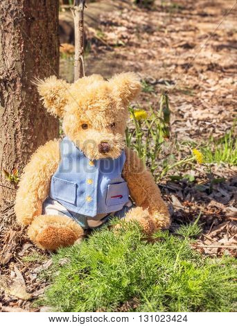 Toy Teddy bear sits woods at sunny day in forest