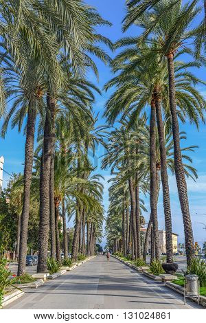beautiful palm tree road at mallorca in the summer