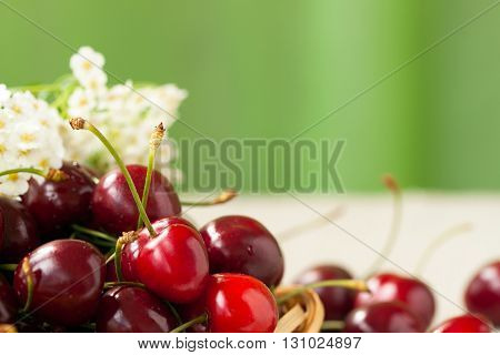 Pile of ripe red sweet cherries closeup with white flowers on a light background