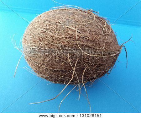 Coconut (cocos nucifera) nut over light blue background