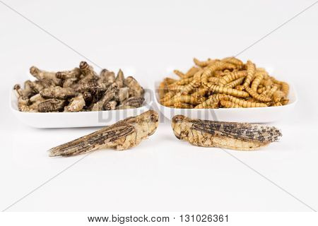 Fried crickets locust molitor insects, in white plate, white background
