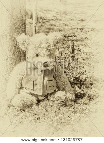Toy Teddy bear sits woods in sepia forest