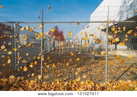 lots of autumn leaves caught on a wire fence