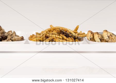 Fried crickets locust molitor insects in a plate