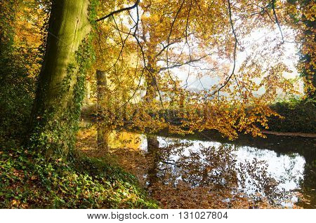 small ditch in a forest in autumn colors