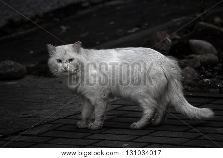 poor dirty homeless cat needs a help