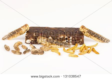 Fried crickets locust molitor insects, cereal energy bar made with insects powder, food of future rich protein France