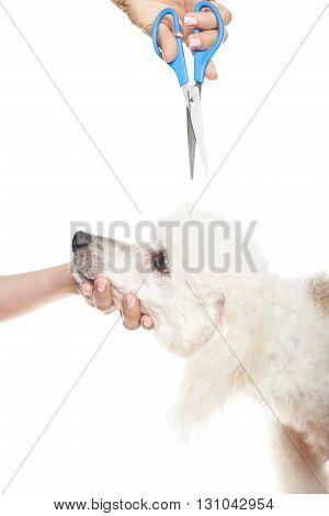 Dog Hair Cut