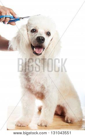Happy Dog Hair Cut