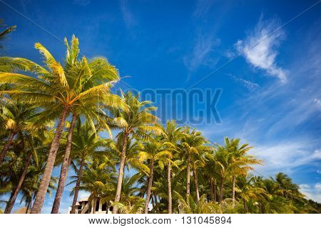 palm trees over blue beautiful sunny sky