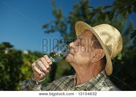 Senior Winzer tasting Wein im Freien im Weingut.