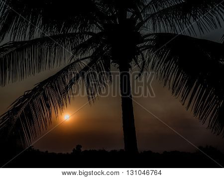 sunset silhouette palm tree with horizon trees line in background