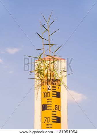 water level indicator or staff gauge and grass on the top clear blue sky.