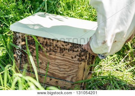 Close view on the beemaster checking the old wooden beehive