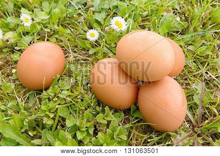 some fresh eggs in the grass with flowers