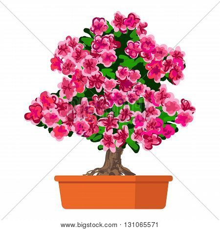 Vector illustration plant in pot, Blooming tree Azalea.